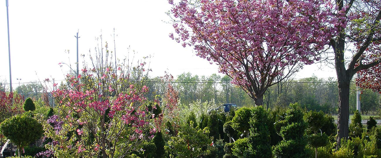 Fruit Trees Ancaster